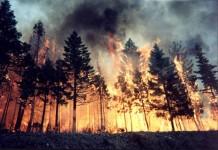 Владимир Поздняков: Надо срочно менять Лесное законодательство, пока не сгорел весь российский лес!