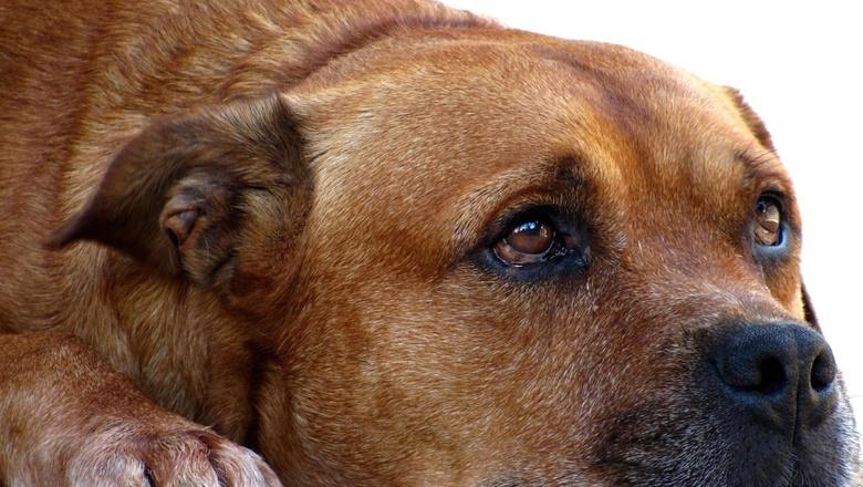 Закон о безнадзорных животных подписали в Удмуртии