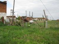 Пир от страха чумы. Свиноводческие комплексы в Удмуртии начинают закрывать и распродавать