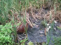 Зловонная река. В Сарапуле долгие годы канализационные стоки целого микрорайона отравляют Каму