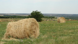Почти каждое шестое сельхозпредприятие в Удмуртии работает в убыток